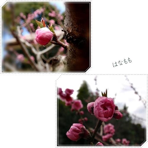 d0075453_19502748.jpg