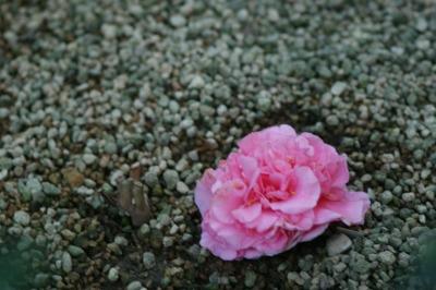 d0141365_18134817.jpg