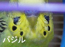 f0196665_0152228.jpg