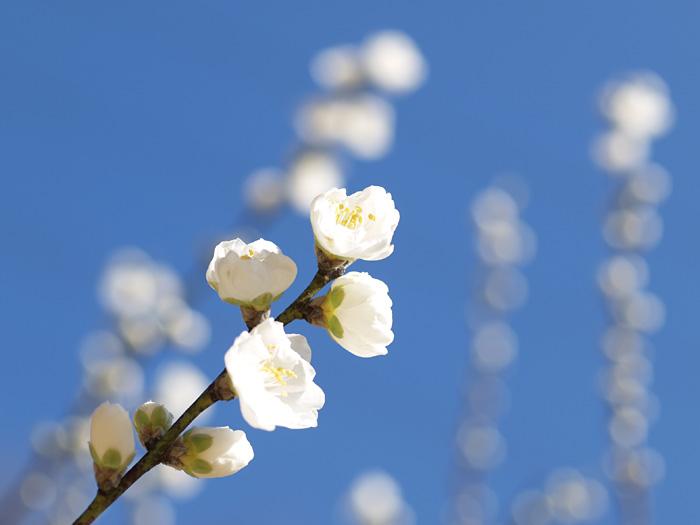 青い空と白い花_b0021375_23143551.jpg