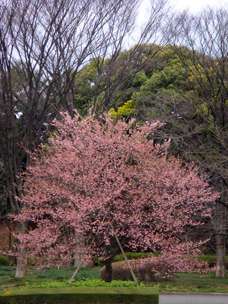 竹橋〜東御苑〜霞ヶ関_f0077521_20521086.jpg