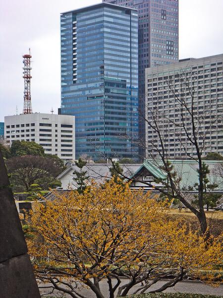 竹橋〜東御苑〜霞ヶ関_f0077521_22524430.jpg