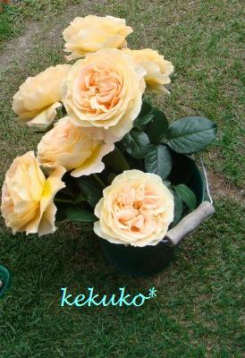 f0170524_1136324.jpg