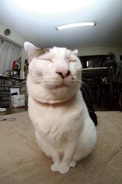 第7回可愛い★ぶさいく顔選手権うちの猫ら内予選落ち・・・PART2_a0028451_12503415.jpg