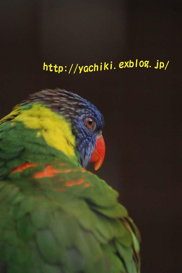 b0153451_2133319.jpg