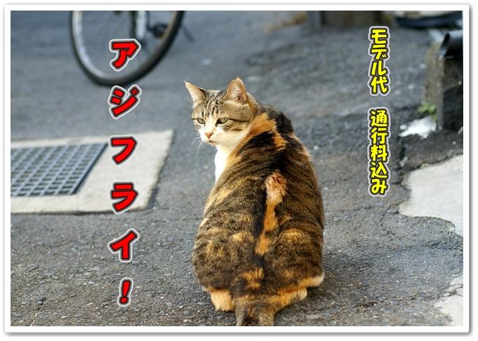 b0163466_1745731.jpg