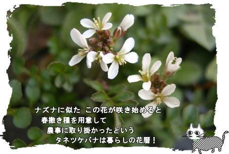 f0137096_21521154.jpg