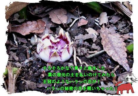 f0137096_21524015.jpg
