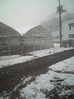 昨日とはうって変わって、とっても寒いです。_d0026905_167325.jpg