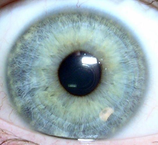 遺伝子をちょっと調べれば目の色がわかる_c0025115_2025092.jpg