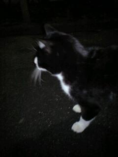 外猫はん_b0072729_22524539.jpg