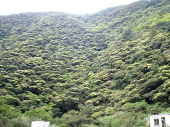 奄美は新緑の季節_e0041337_18134887.jpg