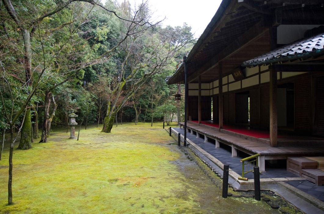 冬の京都 大徳寺 高桐院 楓と苔 2_e0127948_1463447.jpg
