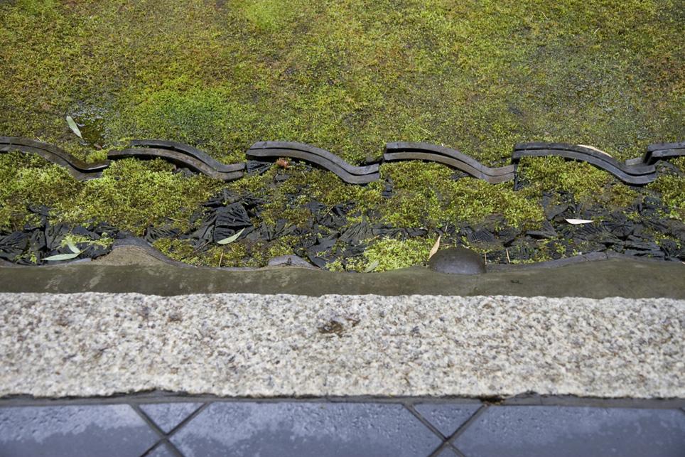 冬の京都 大徳寺 高桐院 楓と苔 2_e0127948_148192.jpg