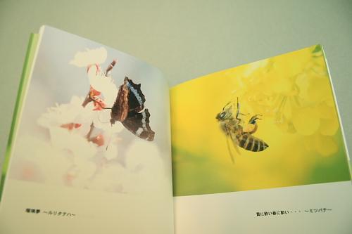 ■■Sippo☆の虫絵巻 ~vol.3~■■_c0195662_16564839.jpg