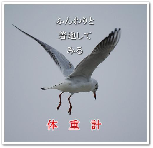 b0163466_12453673.jpg