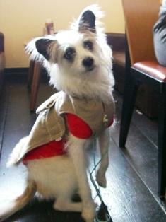 MIX犬のあおいちゃん_e0141978_23524376.jpg