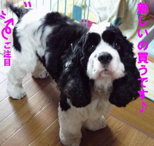 b0140680_12562012.jpg