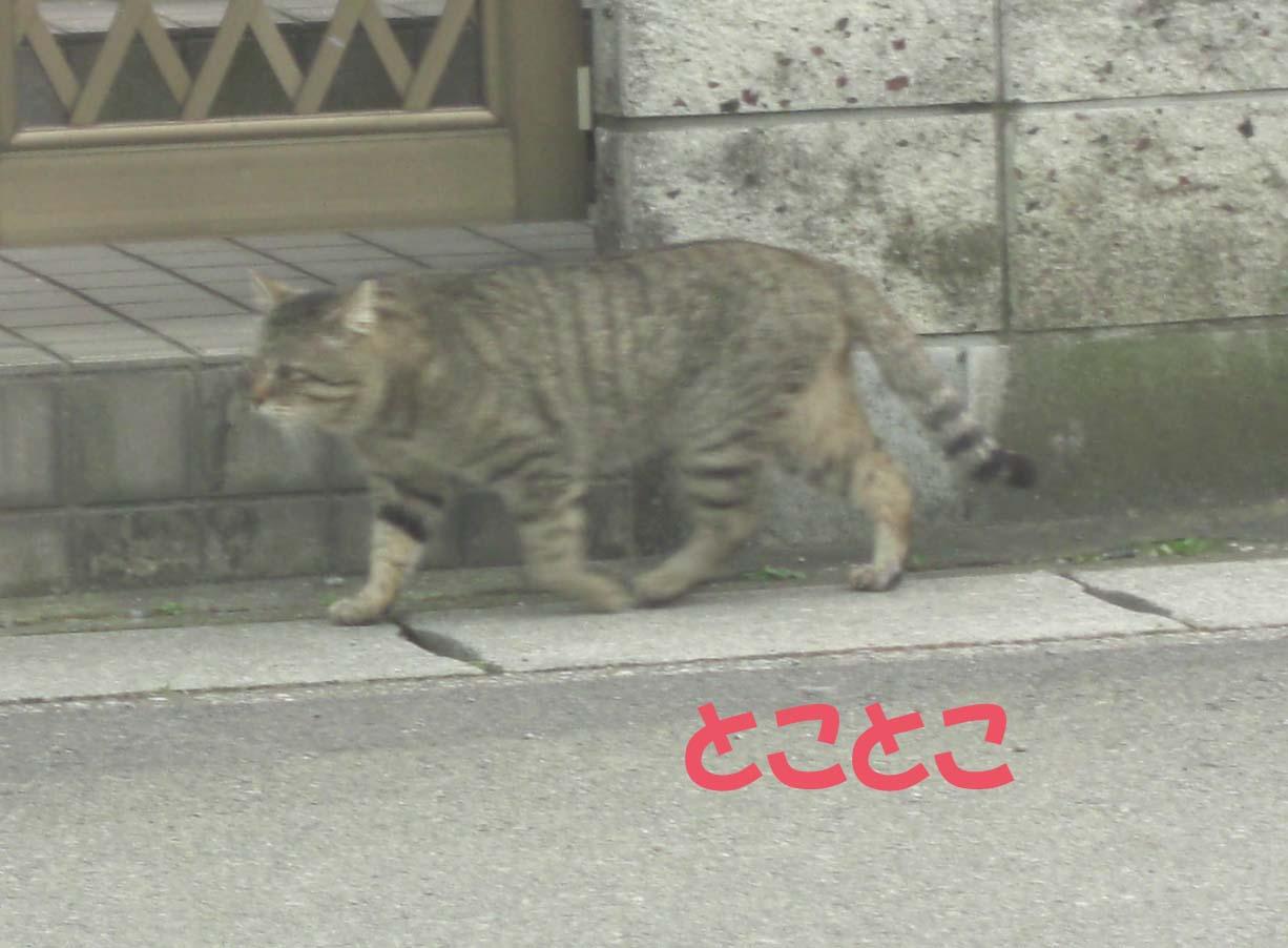 f0180799_11175993.jpg