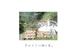 b0120001_2032682.jpg
