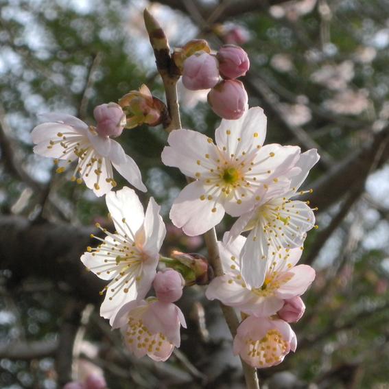 桜咲き春がきた_f0099102_0553668.jpg
