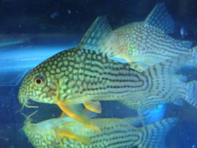 熱帯魚・水草_f0189122_11345675.jpg