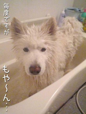 洗ったどー!(正式版)_c0062832_1727145.jpg