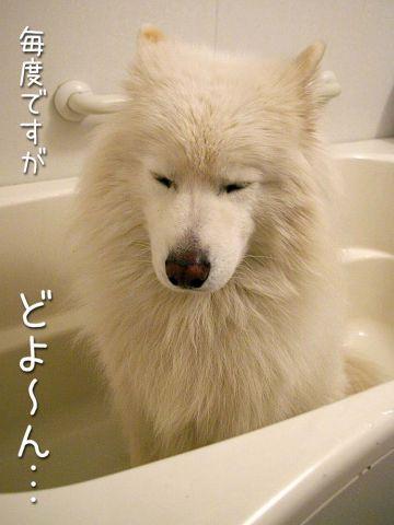 洗ったどー!(正式版)_c0062832_1727930.jpg