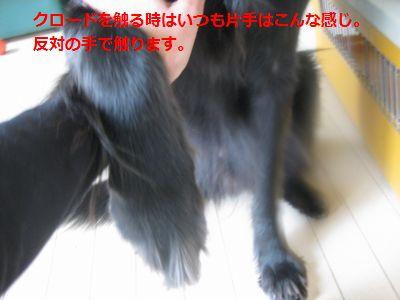b0148945_1233722.jpg