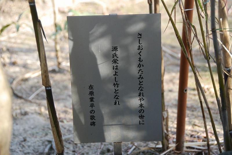 落葉松_c0187781_16575161.jpg