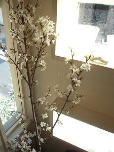 carbon...桜満開!!_f0190816_1511117.jpg