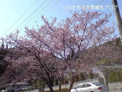 f0105342_1734073.jpg
