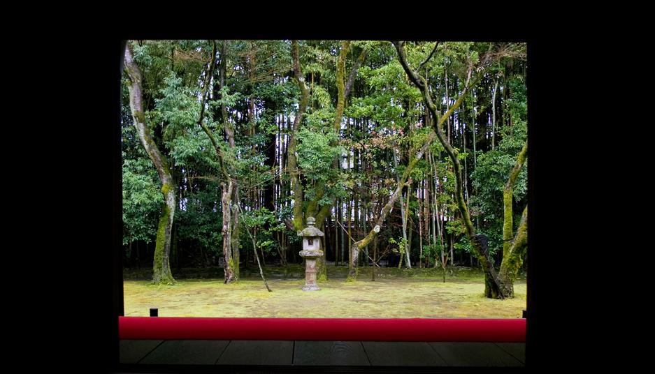 冬の京都 大徳寺 高桐院 楓と苔 3_e0127948_1942129.jpg