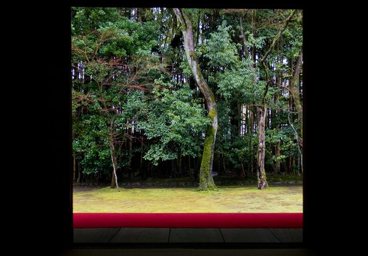 冬の京都 大徳寺 高桐院 楓と苔 3_e0127948_19511378.jpg