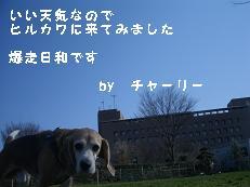b0098660_215384.jpg