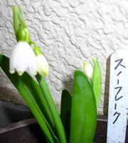 桃の花_f0139963_71198.jpg