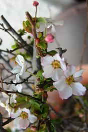 桃の花_f0139963_773296.jpg