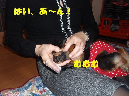 c0151866_1353993.jpg