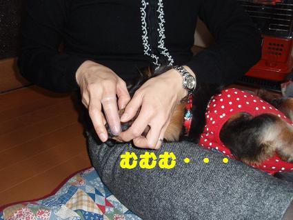 c0151866_1360100.jpg