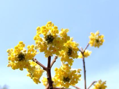 何の花?_e0003966_2315081.jpg
