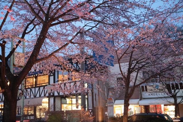 旧軽井沢ロータリーの桜_f0091207_11283595.jpg
