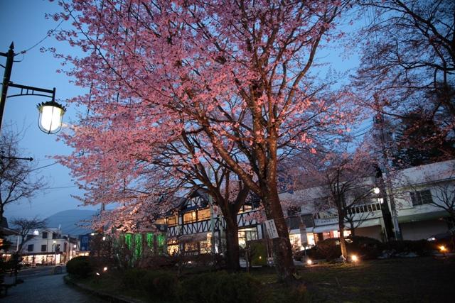 旧軽井沢ロータリーの桜_f0091207_11363323.jpg