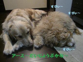 3月10日 11日_e0136815_7511255.jpg