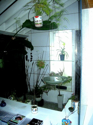 今年も元気!温室を彩るパフィオの開花_e0010418_13471948.jpg