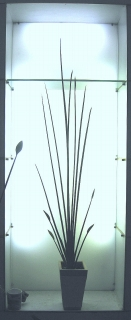 今年も元気!温室を彩るパフィオの開花_e0010418_1423339.jpg