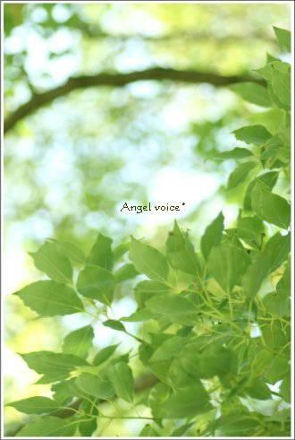 green_d0147742_2375857.jpg