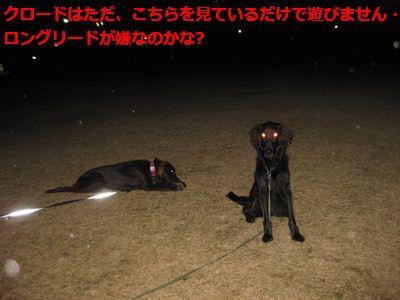 b0148945_0425980.jpg
