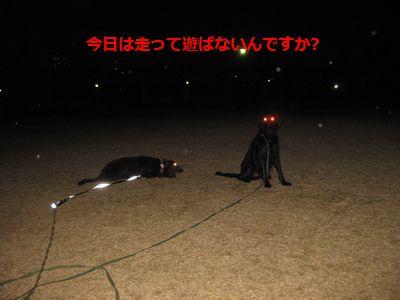 b0148945_0431734.jpg