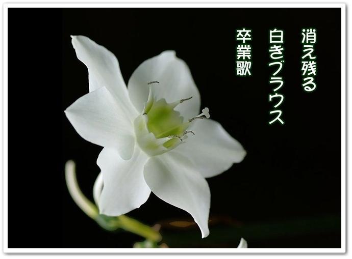 b0163466_1803732.jpg