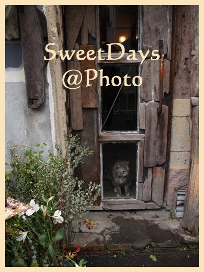 神楽坂の猫_e0046675_23291934.jpg